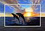 Delfíní hrátky